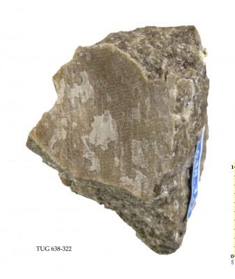 Ptilodictya sp., TUG 638-322
