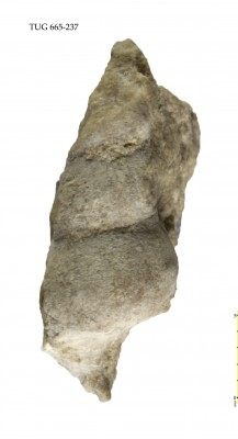 Murchisonia (Hormotoma) meyendorfi, TUG 665-237
