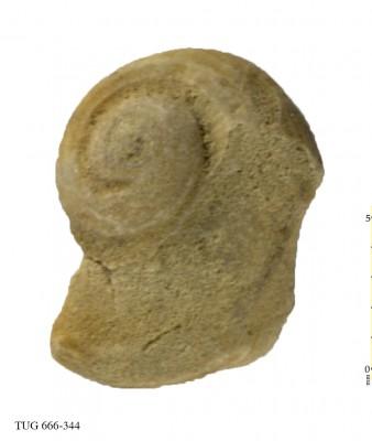 Poleumita discors, TUG 666-344
