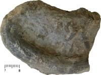 Rhizocorallium zenense, TUG 668-80