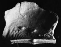 Kiaeromena (Bekkeromena) ilmari (Rõõmusoks, 2004), TUG 72-202