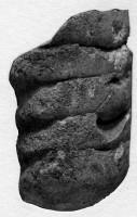 Orthoceratoidea