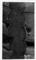 Ormoceras veteranum Stumbur, TUG 939-31