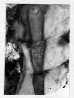 Beloitoceras nanum (Eichwald), TUG 939-57