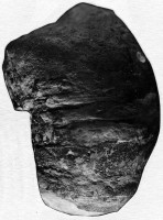 Multiceratoidea